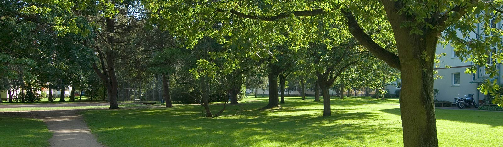 Meykopff Gartenbau Lübeck Baumpflege