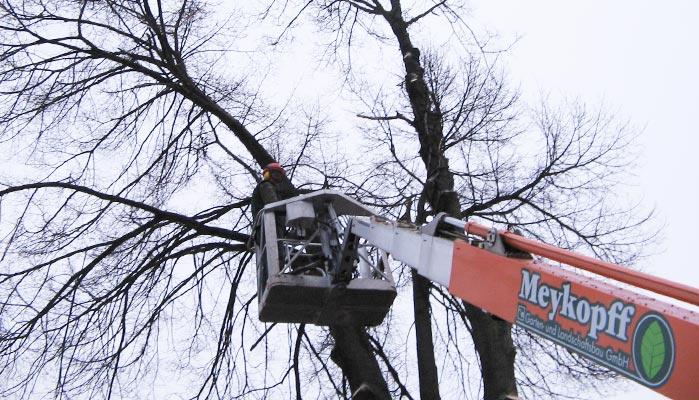 Meykopff Garten- und Landschaftsbau bei Baumarbeiten in Lübeck
