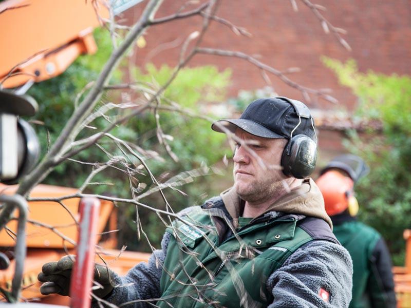 Meykopff Baumschnitt Baumpflege Lübeck Arbeiter