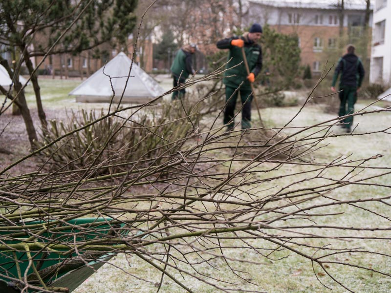 Meykopff Garten- Landschaftbau Baumschnitt Strauchschnitt Abschnitte auf Schubkarre