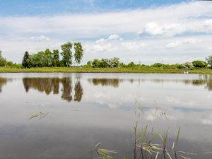 Meykopff Garten- und Landschaftsbau Drohnenflug Teich