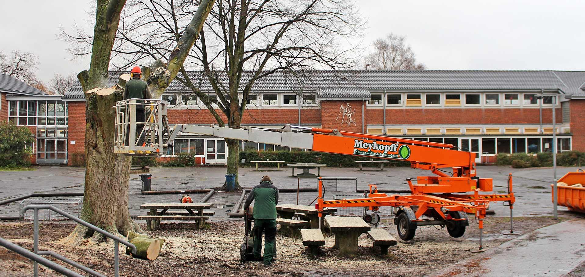 Bäume Fällen An Der Albert Schweitzer Schule Meykopff
