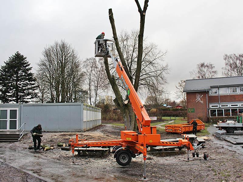 Meykopff GaLaBau Lübeck Baumfällarbeiten Steiger