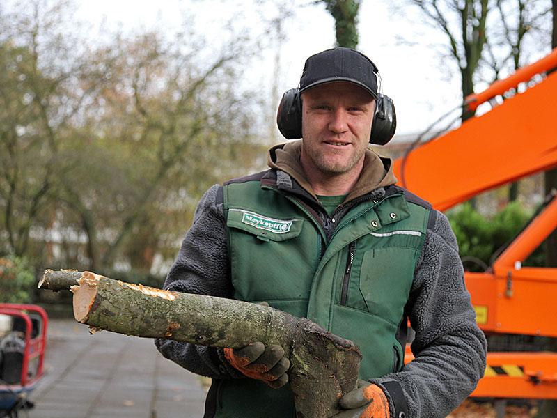 Meykopff GaLaBau Lübeck - unser Team beim Baumschnitt