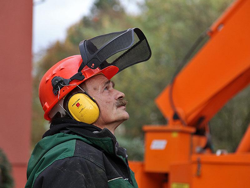 Das Meykopff-GaLaBau-Team beim Baumbeschnitt