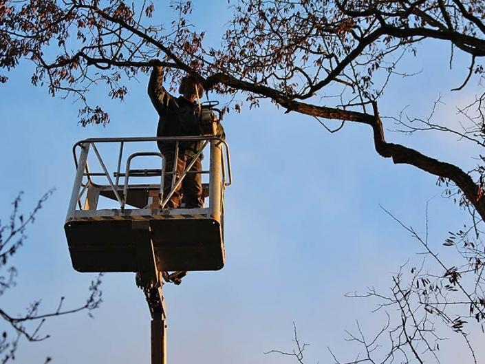 Meykopff-GaLaBau bei der Arbeit: Baumschnitt per Kettensäge