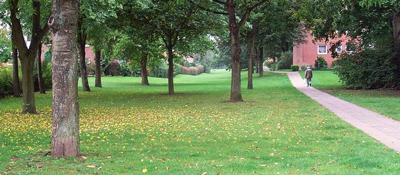 Baumpflege und Baumarbeiten in Lübeck macht Meykopff Gartenbau