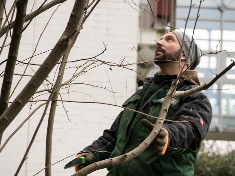Meykopff Garten- Landschaftbau Baumschnitt Strauchschnitt Mitarbeiter bei der Arbeit