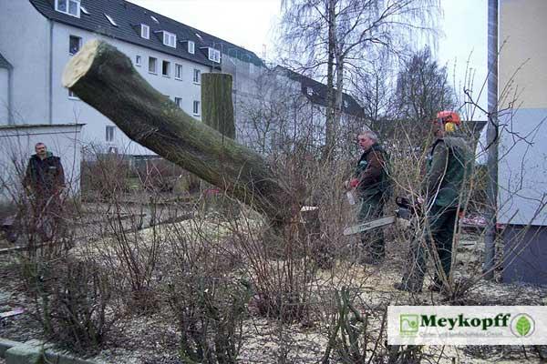 Meykopff GaLaBau Lübeck - Baumfällung