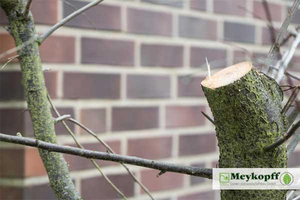 Meykopff Garten- Landschaftbau Baumschnitt Strauchschnitt