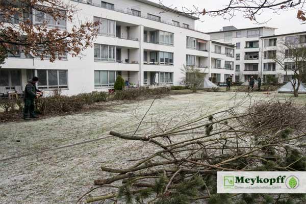 Meykopff Garten- Landschaftbau Baumschnitt Strauchschnitt Mitarbeiter Wohnanlage