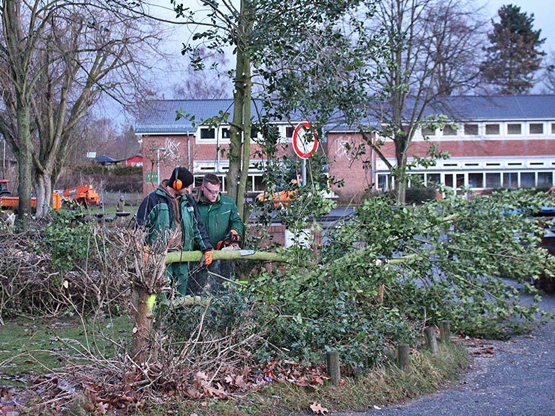 Meykopff GaLaBau Lübeck Baumfällarbeiten Buschwerk