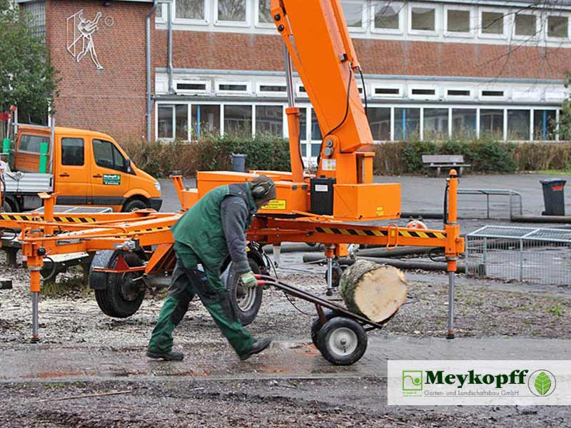 Meykopff GaLaBau Lübeck Baumfällarbeiten Baumstamm
