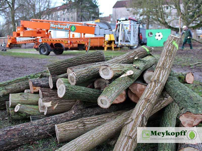 Meykopff GaLaBau Lübeck Baumfällarbeiten Äste