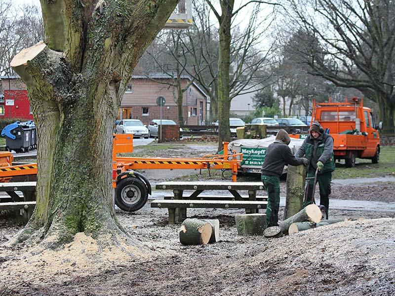Meykopff GaLaBau Lübeck Baumfällarbeiten Teamwork