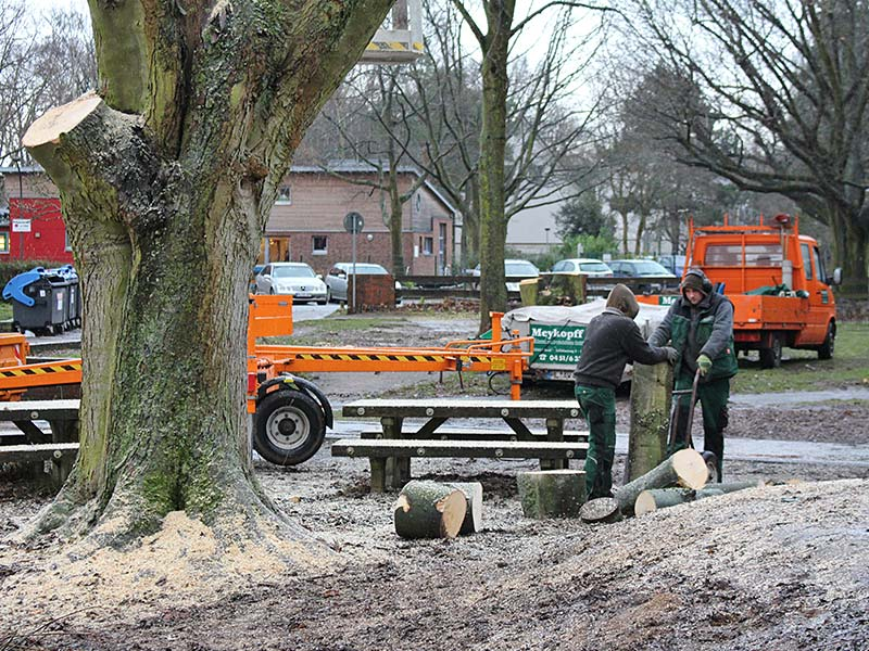 Baume Fallen An Der Albert Schweitzer Schule Meykopff