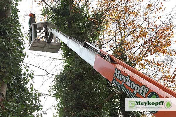 Meykopff GaLaBau Lübeck - mit dem Hubsteiger in der Baumkrone