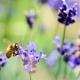 Meykopff Gartentbau Lübeck Bienen und Umweltschutz Foto: shell ghostcage pixabay
