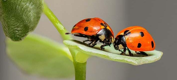 Meykopff Insektenschutz Beitrag