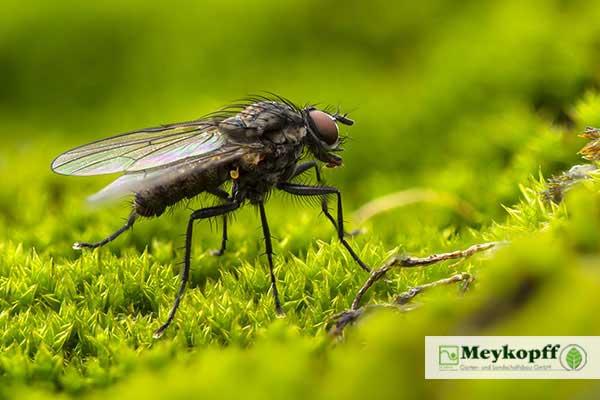 Meykopff Insektenschutz Fliege