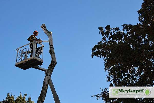 Meykopff GaLaBau Lübeck - Baumpflege mit Steiger