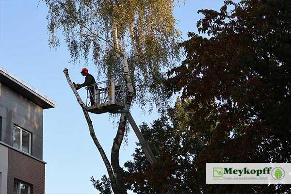 Meykopff GaLaBau Lübeck - Baumschnitt mit Motorsäge