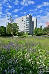 Blumenwiese in Ingolstadt mit Saatgut von Rieger-Hoffmann