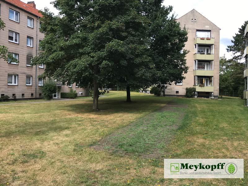 Meykopff Blumenwiesen in Wohnanlage Vorbereitung 3