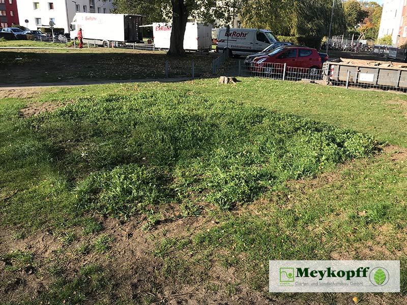 Meykopff Blumenwiesen in Wohnanlage Vorbereitung 6