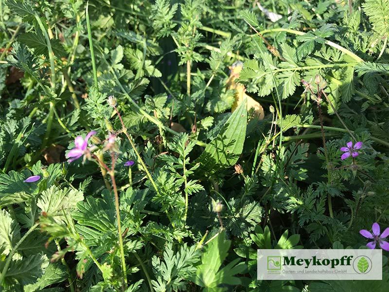 Meykopff Blumenwiesen in Wohnanlage Vorbereitung 4