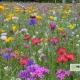 Meykopff Blumenwiesen in Wohnanlage