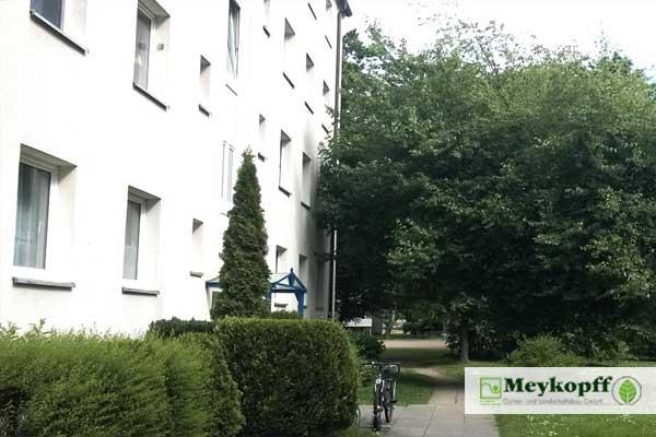 Meykopff Baumschnitt Baumpflege Lübeck Baum wächst an Haus