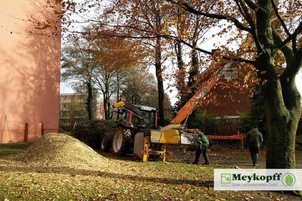 Meykopff Baumschnitt Baumpflege Lübeck Häcksler